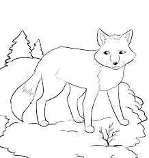 Arctic Fox Coloring Pages Free Printable Of Animals Animal Porongurup