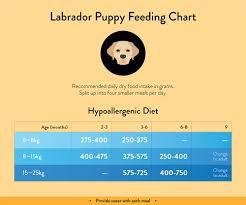 Lab Puppy Food Chart Labrador Feeding Guide With Chart Lovejoys Lovejoys