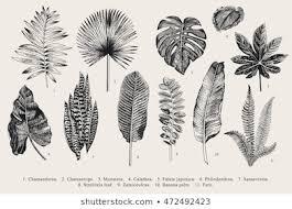 Botanical Images Stock Photos Vectors Shutterstock