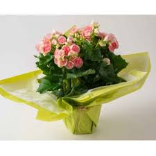 Send a parcel to colombia from only £36.95. Flower Delivery Brazil Online Florist Brazil
