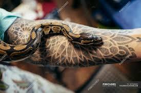 змея ползет на мужской руке с тату желтый искусство Stock Photo