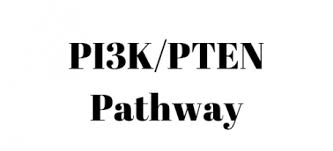 Pi3k Pten Pathway Conference Synopsis Cloves Syndrome