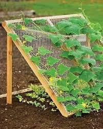 Small Picture Vegetable Garden Design Gardening Ideas