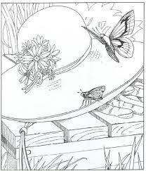 Vlinders Kleurplaat Jouwkleurplaten