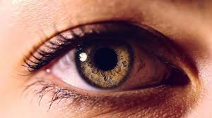 Pics Of Eyes Eyes The Windows To Your Health