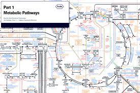 Metabolic Pathways Chart Roche Biochemical Pathways