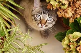 9 poisonous plants every cat owner