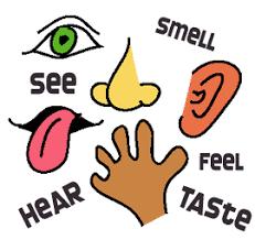 Image result for the five senses clip art