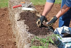 sowing directly in straw bales