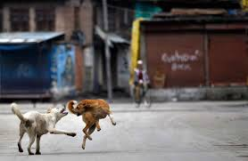 essay on the street dog