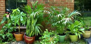 Houseplants are great additions to your home, improving air quality while  bring a little bit of nature indoors. However, if you have children or pets,  ...
