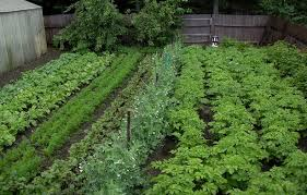 Small Picture Vegetable garden designs and ideas