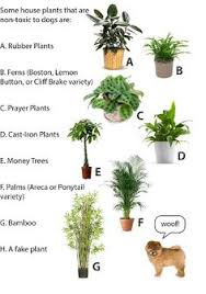 Dog-safe potted house plants for inside your home