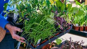farm and garden supply. Simple Farm With Over 65 Years Of Experience The Knowledgeable And Experienced Staff  At Grangettou0027s Makes It Perfect Place To Get All Your Landscape Nursery  Intended Farm And Garden Supply