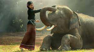 Elephant Training Ultra HD Desktop ...