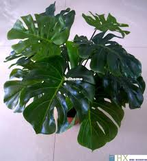 Decorative Indoor Trees 2017 Turtle Leaves Plants Artificial Tree Plants Home Decoration