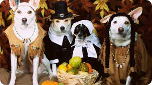 Image result for thanksgiving dinner dog food
