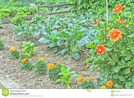 Ornamental Kitchen Garden Decorative Kitchen Garden With Vegetables And Flowers Stock Photo