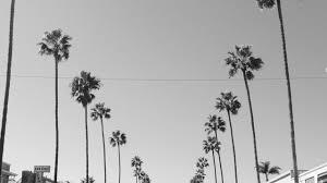 palm tree tumblr black and white palm trees tumblr black and white81 and