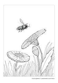Zeg Kleine Bij Kinderboek Natuur