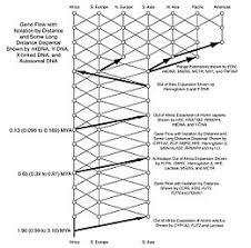 Ape Evolution Chart Human Evolution Wikipedia