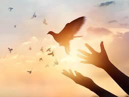 Resultado de imagen para paloma de la paz