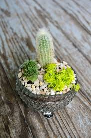 Log in | Tumblr | Cacti and succulents, Plants, Pretty plants
