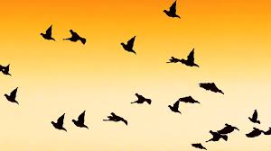 birds flying in the sky silhouette. Delighful Birds Inside Birds Flying In The Sky Silhouette D