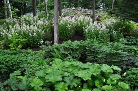 Small Picture Shade garden design ideas how to choose the right plants