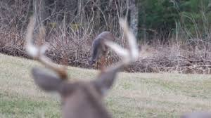 Deer Movement Chart South Carolina Timing South Carolinas Deer Rut