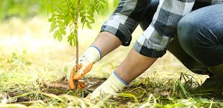 One billion trees project - do your research before you dig   Ashburton DC