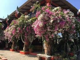 puerto vallarta s botanical garden places 5th in usa today s best gardens