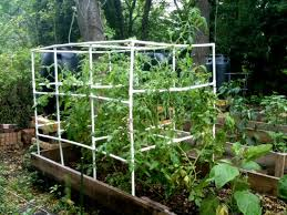 Diy tomato cage Prepare Diy Pvc Tomato Cage Better Than Never Better Than Never Diy Pvc Tomato Cage