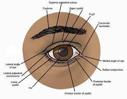 Eye Diseases Chart Astrology Vedic Science Eye Diseases Or Blindness In