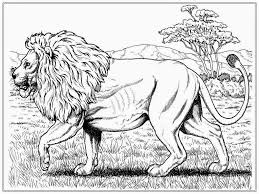 Lion Coloring Pages Printable Http Procoloring