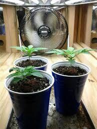 Grow Light Schedule Cannabis Light Schedules Vegetative Vs Flowering Stage