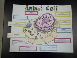 animal cell project poster. Contemporary Cell Image Result For Animal Cell 3d Project Poster Throughout Animal Cell Project Poster D