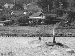 今日もむかご狩りそして舞茸収穫 食べ物 カクさん