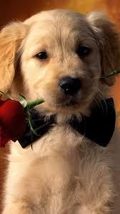 Wallpaper - Cute Dogs Wallpaper For ...