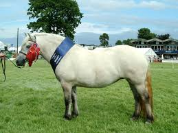 Pony Height Chart Pony Wikipedia
