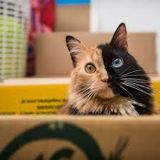 gato unico