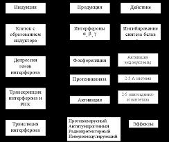 Реферат Противовирусные препараты com Банк рефератов  Противовирусные препараты