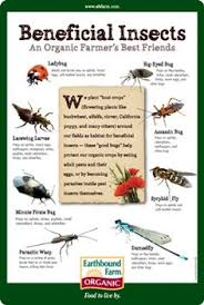 Beneficial Insects Chart 19 Best Insects Garden Allies Images Insects Beneficial