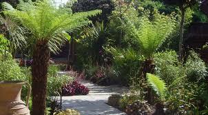 tropical garden design tropical by