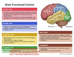 Brain Functional Control