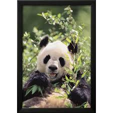 giant panda framed print wall art by dlillc on giant panda wall art with giant panda framed print wall art by dlillc walmart