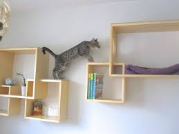 use your wall space pallet shelvesdiy cat