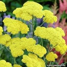 Best Plants Color Yellow Images On Pinterest Color Yellow