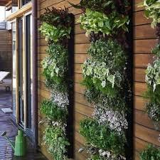 vertical garden vertical herb gardens