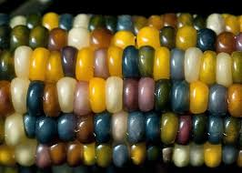 gem corn is available through at least two heirloom seed suppliers in the usa that i know of and no doubt through many seed savers networks